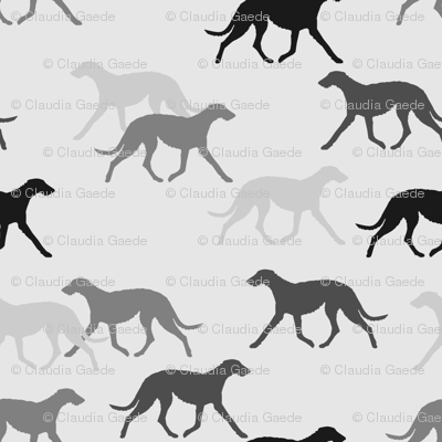 Deerhound black-grey