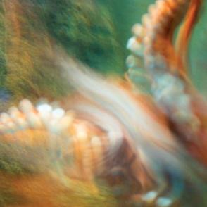 Octopus photograph