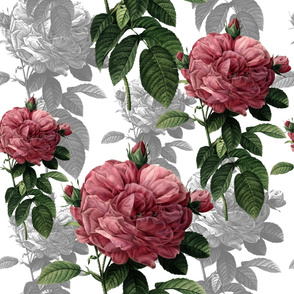 Redoute' Roses ~ Pink and Grey