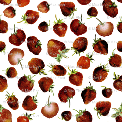 Strawberry 1899 No. I
