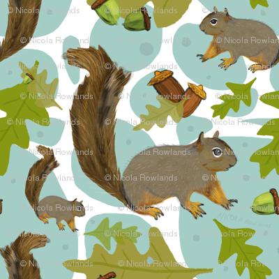 Woodland squirrels