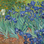 Van Gogh - Irises (1889)