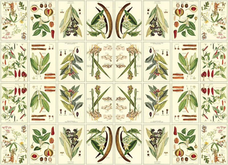 File New SPQR flag as well Easter Bunny And Eggs Vectors as well Botanical illustration wallpaper also Restaurant Menu Cover As Vintage Design together with Spring Flower Frames For Photoshop. on vector mirror