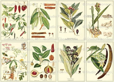 Botanical Spices