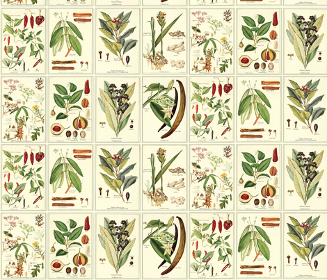 Botanical Spices fabric by studiofibonacci on Spoonflower - custom fabric