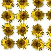 Rsunflower2_shop_thumb