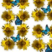 Rsunflower_2_with_butterflies_shop_thumb