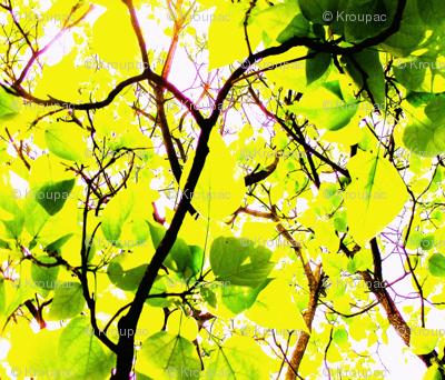 Spring Catalpa Trees