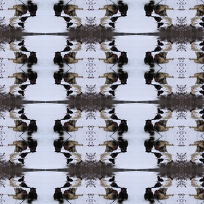 Sled Dogs Through a Kaleidoscope