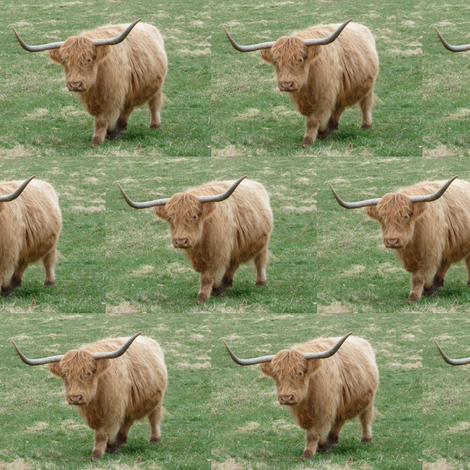 Highland Coo (Blonde) fabric by ravynscache on Spoonflower - custom fabric