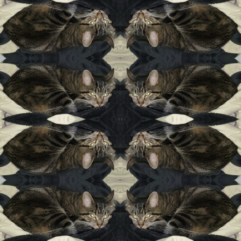 Storm Cat fabric by ravynscache on Spoonflower - custom fabric