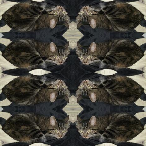 Storm Cat fabric by ravynscache on Spoonflower - custom fabric