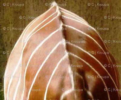 Kudu Shield