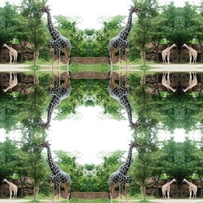 Giraffe Circles