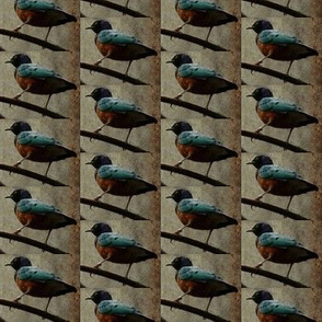 Tropical Birds (rustic)