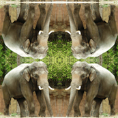 Elephant Geometric