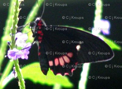 Butterfly Geometric
