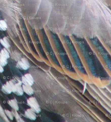 Bird Wing Geometric