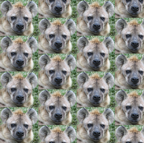 Hyena Faces fabric by ravynscache on Spoonflower - custom fabric