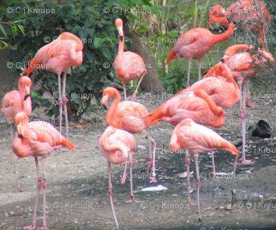 Flamingos on the Green