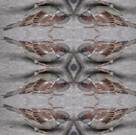 Sparrows fabric by ravynscache on Spoonflower - custom fabric