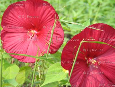 Hibiscus Quilt