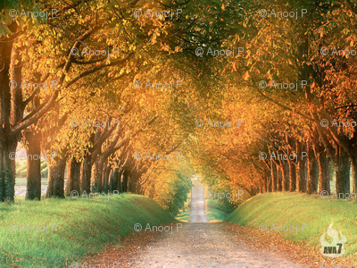 Autumn_Road_Cognac_Region_France_1024