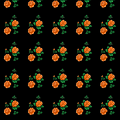 orange_rose_on_black