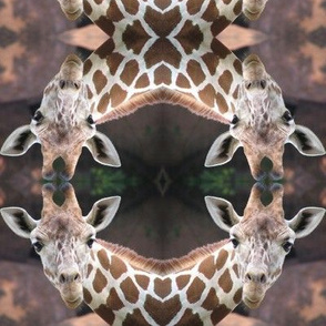 Giraffe Circles Two