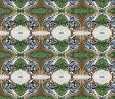 Tiger Faceoff fabric by ravynscache on Spoonflower - custom fabric