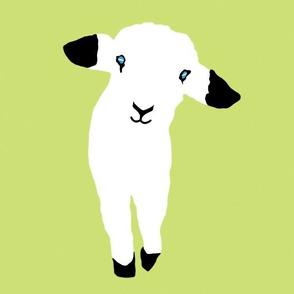 Cute Lamb Babies