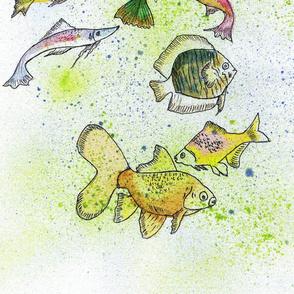 Fish Abundance