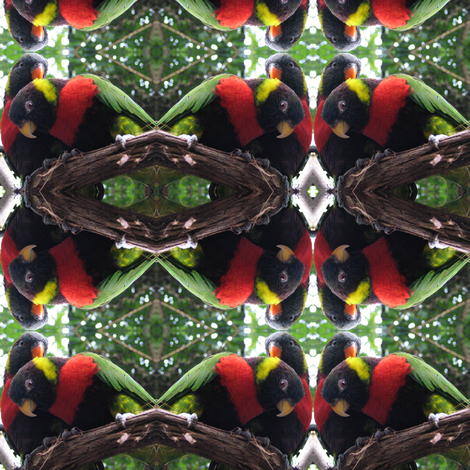 Lorikeet Pair fabric by ravynscache on Spoonflower - custom fabric