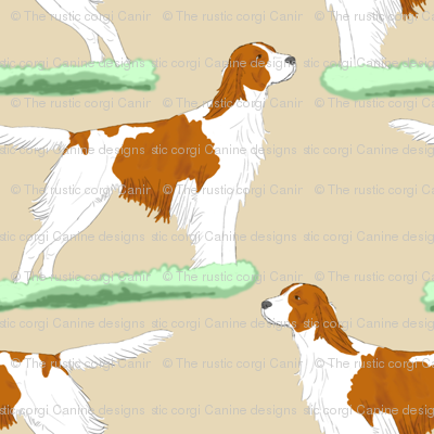 Irish red and white Setters - tan