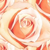 Romantic_roses___pale___medium_shop_thumb
