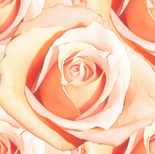 Romantic Roses ~ Pale ~ Medium