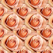 Rlady_hamilton_roses_bright_shop_thumb