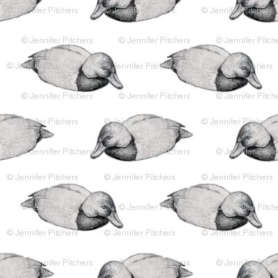 Duck in Grey