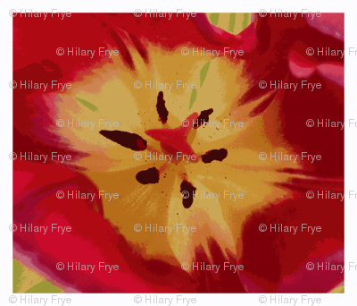 Big Red Tulip embroidery panels