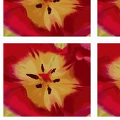 Tulip_cropped_2_shop_thumb