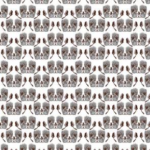 Squirrels and Acorns in Grey