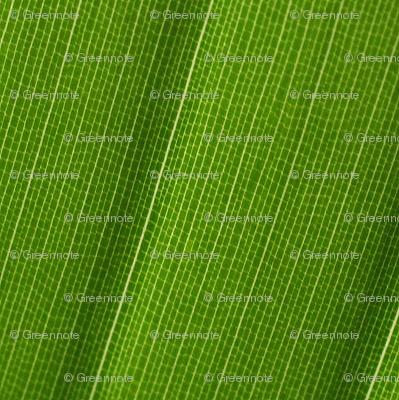 Lace chevron (leaf cells)