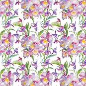 Rrorchids_purple_shop_thumb