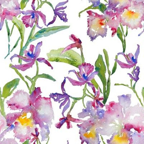 Orchids_Purple