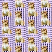 1812296_rrnorfolk_terrier_best_shop_thumb