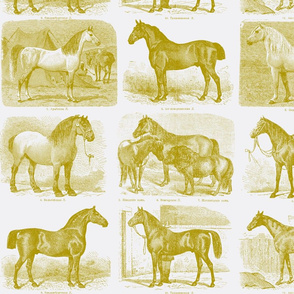 All those Pretty Horses