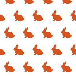 rabbit rabbits bunny bunnies orange