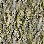 Rrtree_bark_shop_thumb