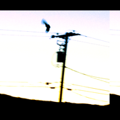 hawks & electrical lines