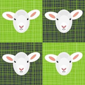 Lambs on Green Grass